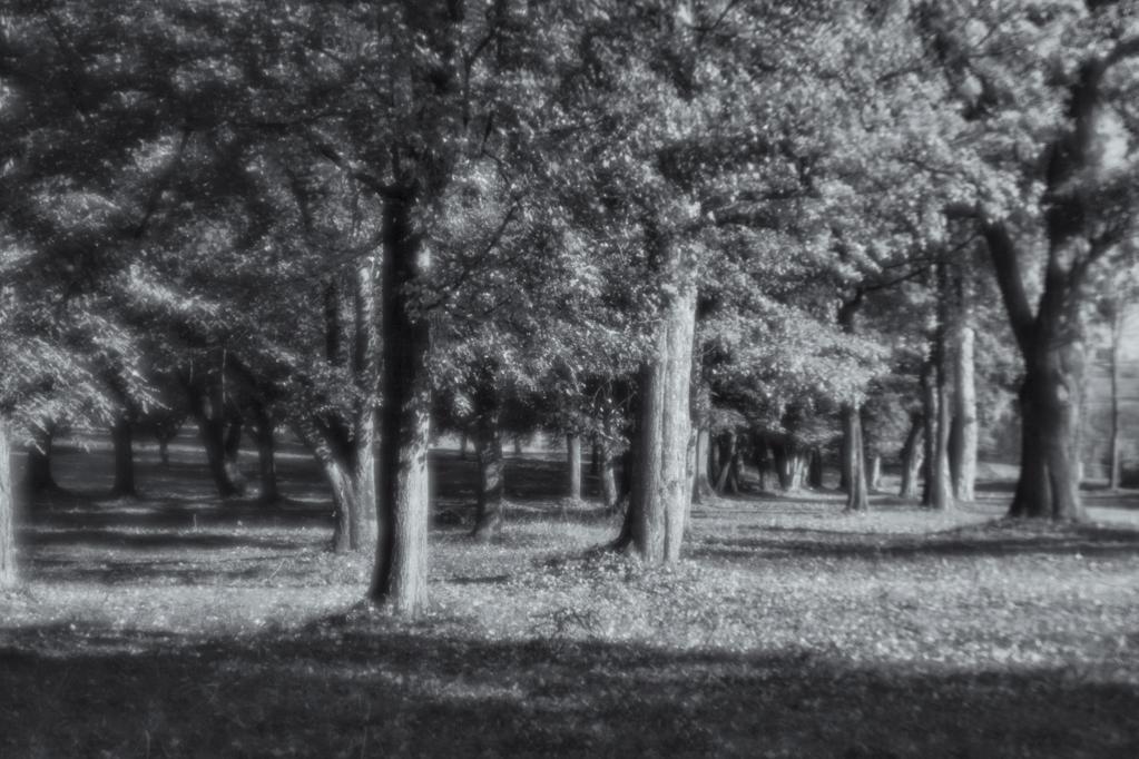 10. Park w Falejówce