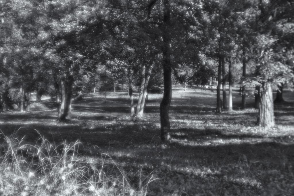 11. Park w Falejówce