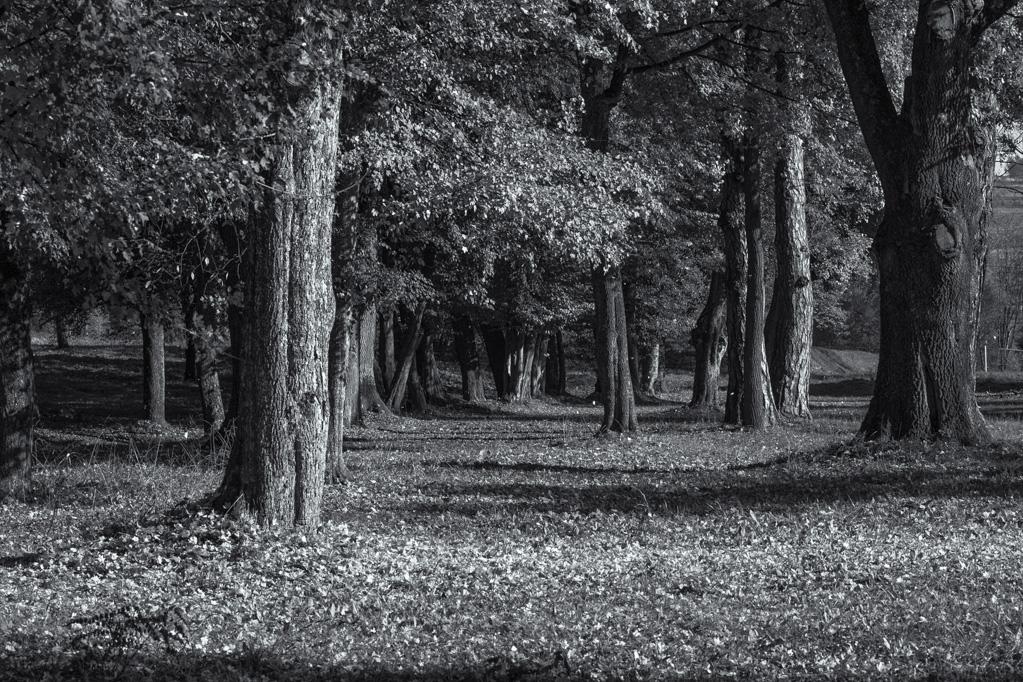 13. Park w  w Falejówce
