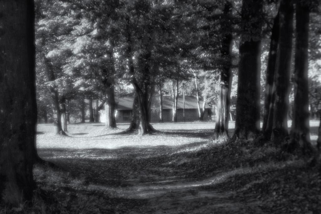 7. Park w Falejówce